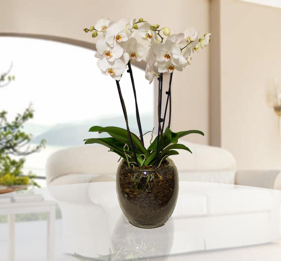 Orchidea in vaso 28 images vasi per orchidee vasi for Vasi per orchidee ikea